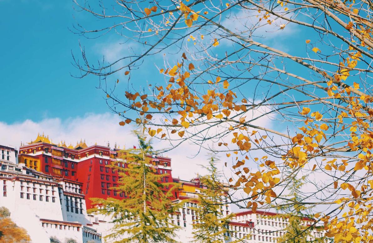 分享一组布达拉宫的撩人秋色
