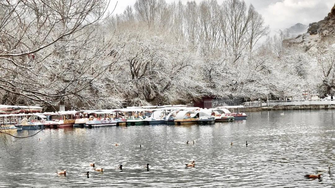 拉萨的一场春雪,美爆了!
