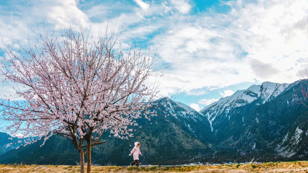 林芝桃花究竟有多美?这份春天治愈系美图告诉你