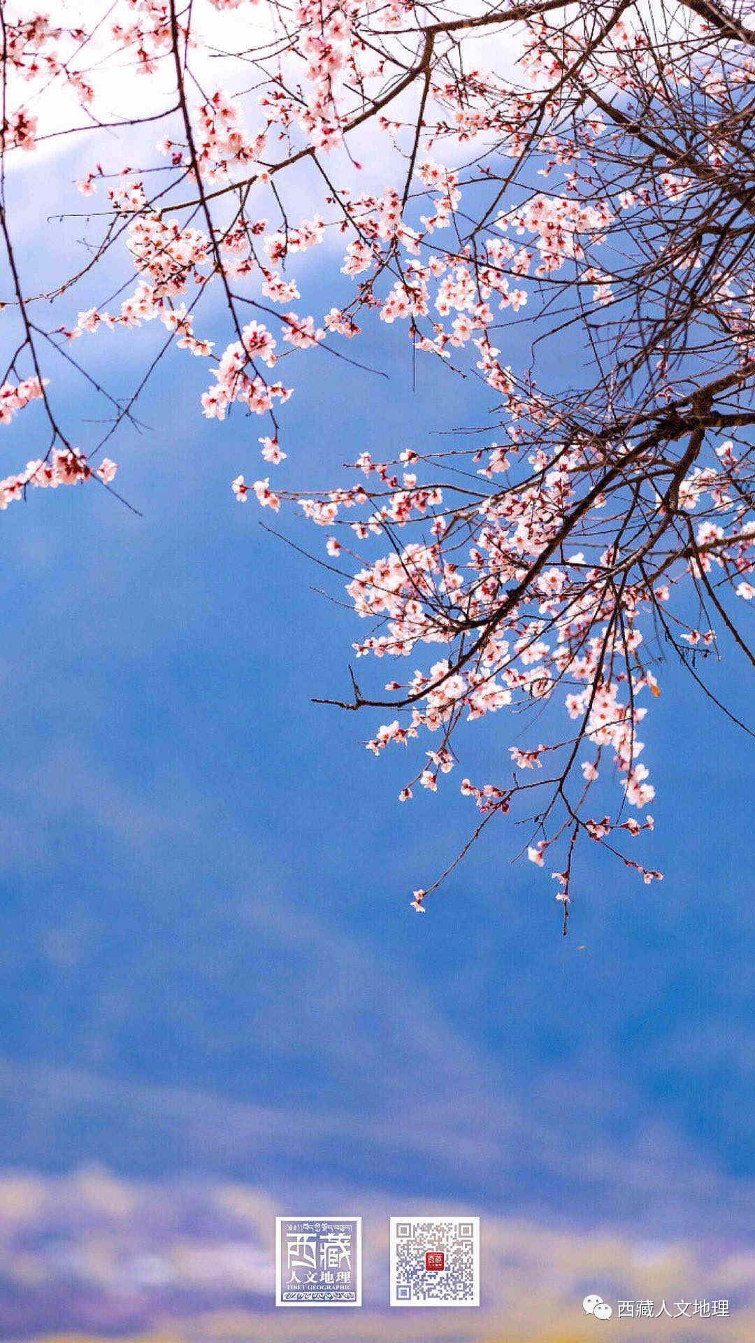 西藏四月天,换张春天的壁纸 换种芳菲的心情