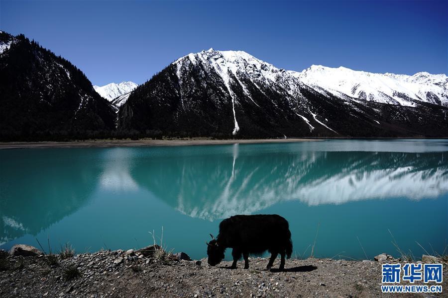 美丽的然乌湖(图)