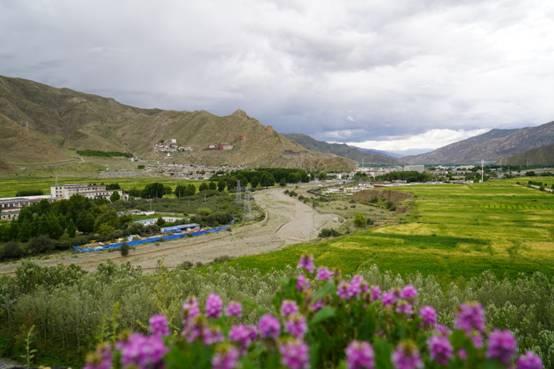 【组图】6月,油菜花在藏王陵景区盛开