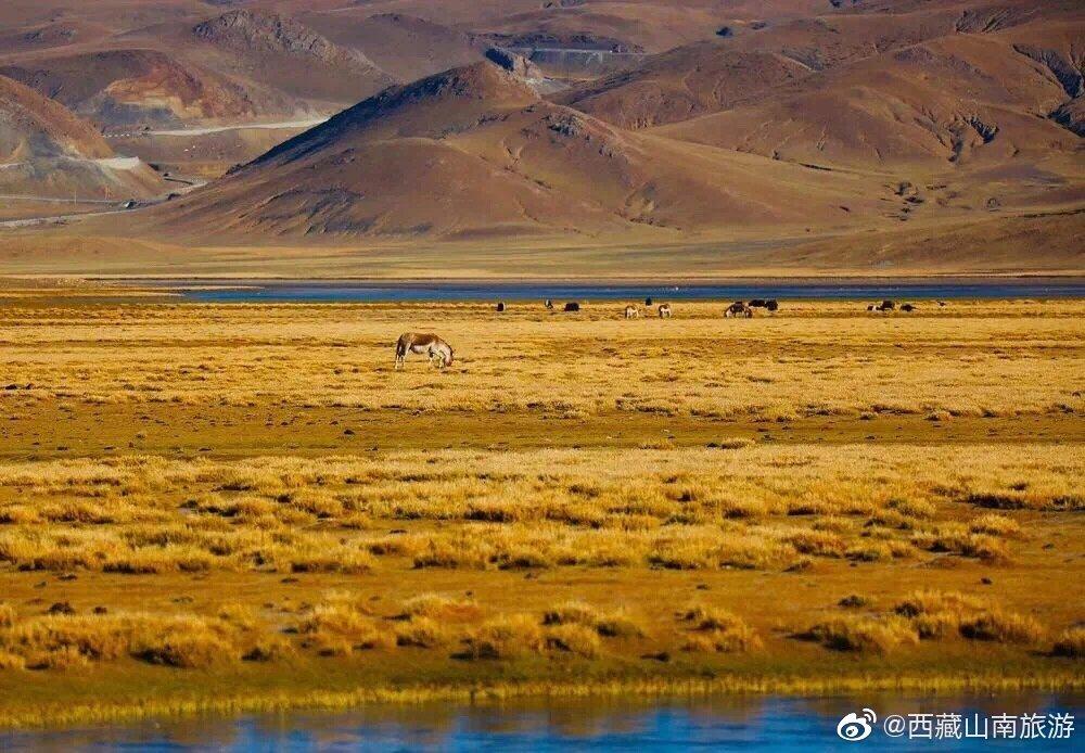 哲古草原,远离世俗,没有喧嚣