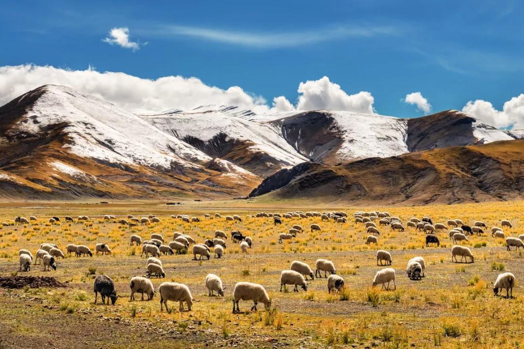 错过西藏的10月,你就错过了这个星球最壮丽的秋天!