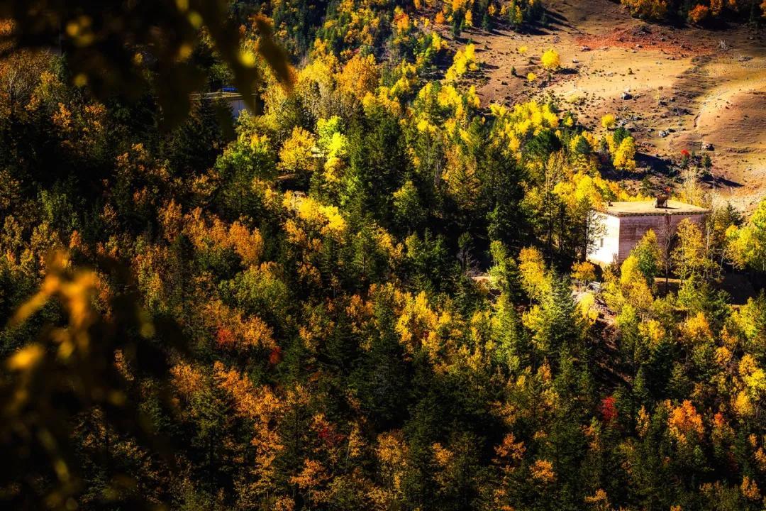 秋之芒康 | 红拉山的秋,五彩斑斓的童话世界