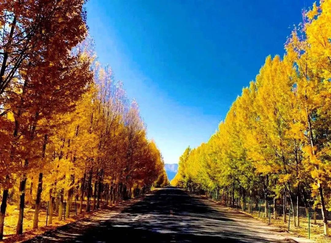 有一种深秋,叫西藏!