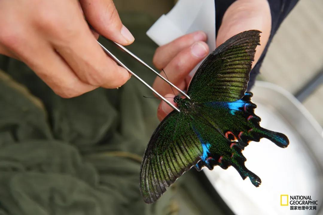 我在墨脱找蝴蝶